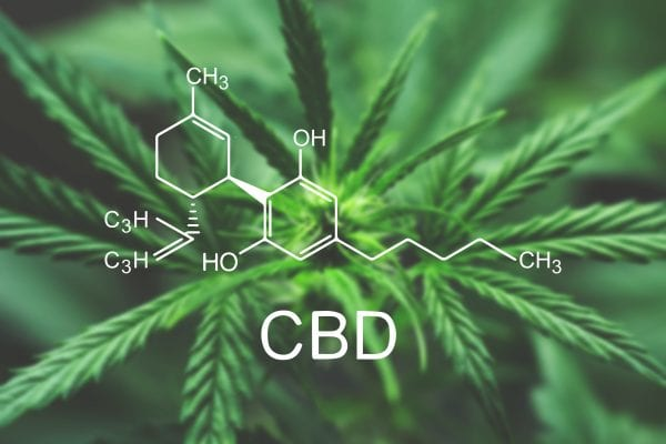 How long does CBD stay in your system?