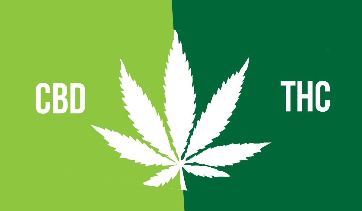 CBD in THC
